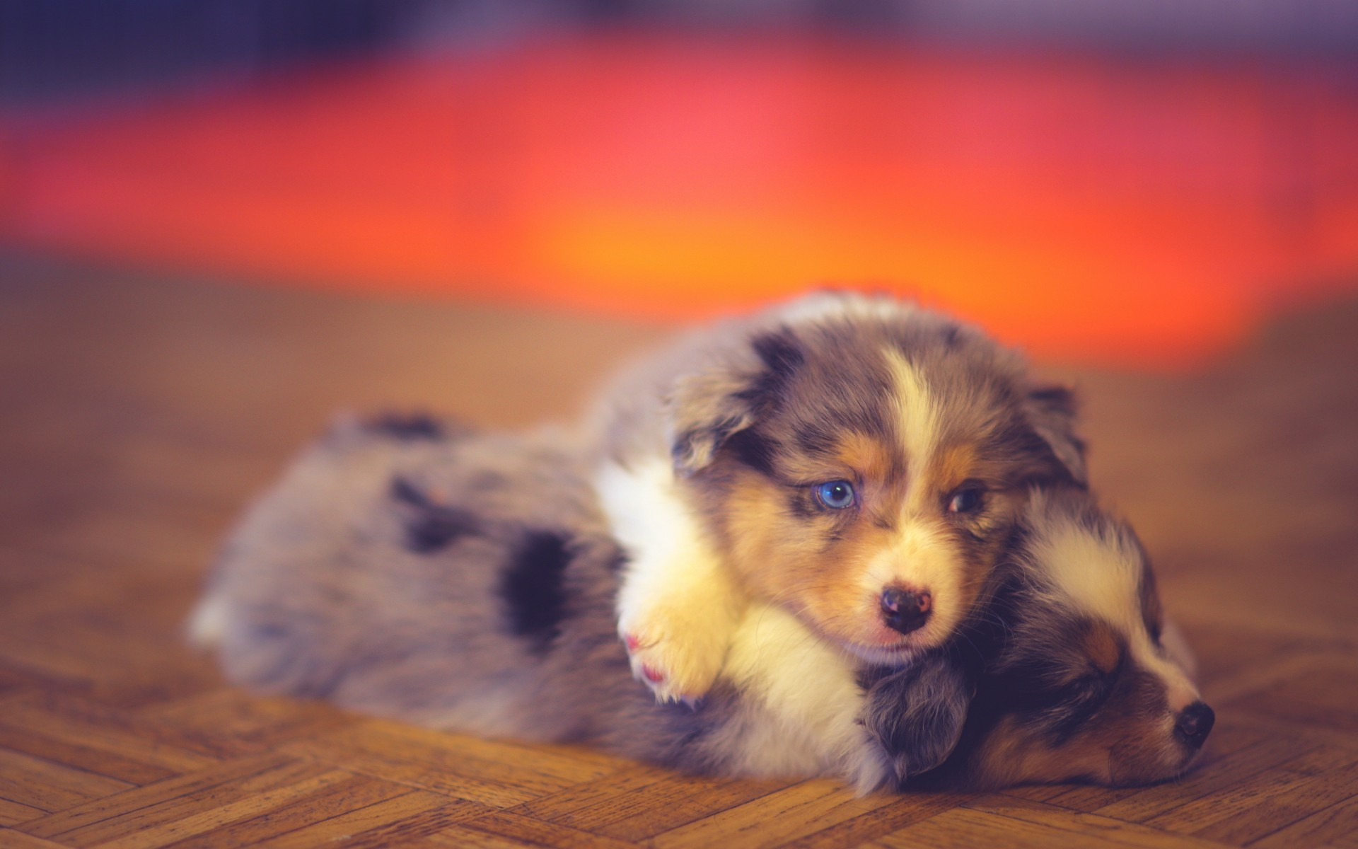 Puppies with blue eyes