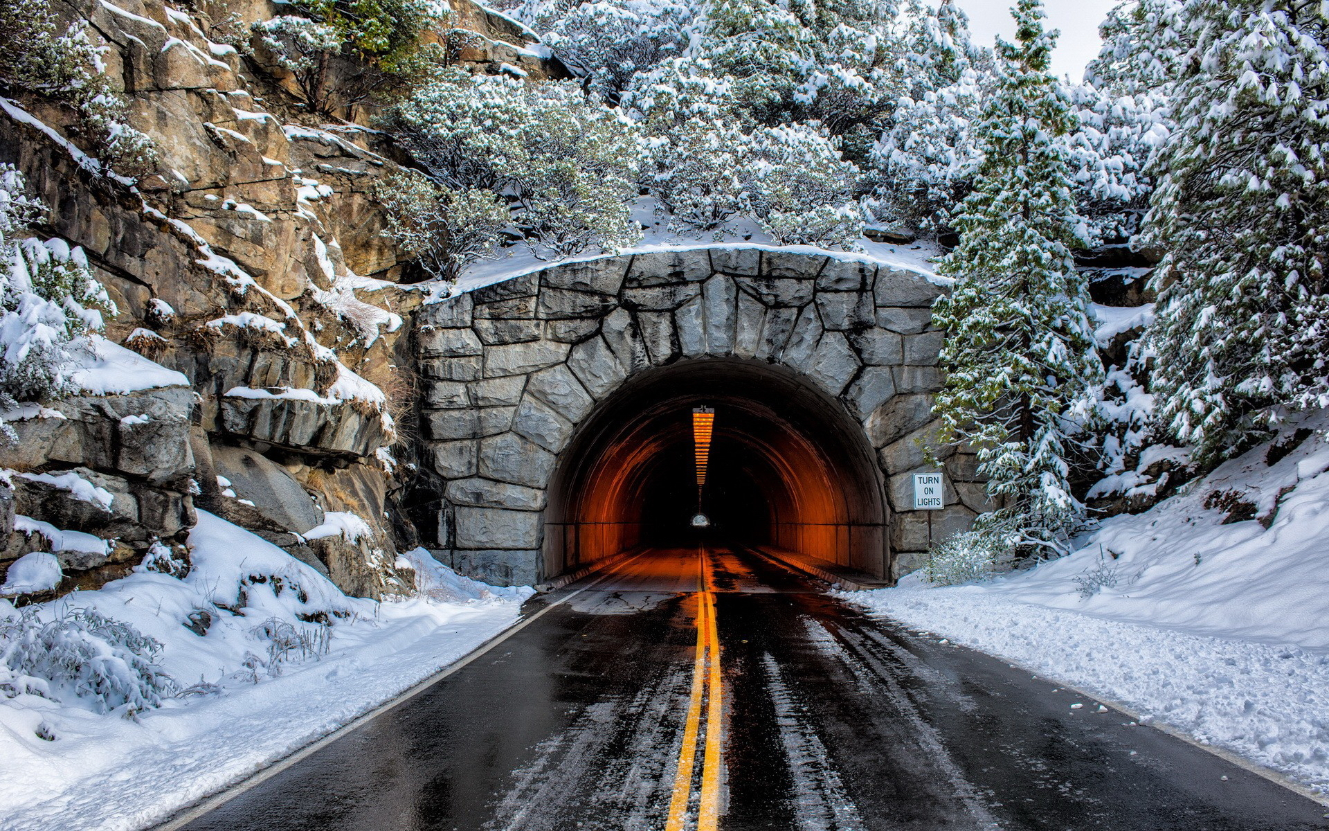 Christmas trees, winter, tunnel, road, nature,