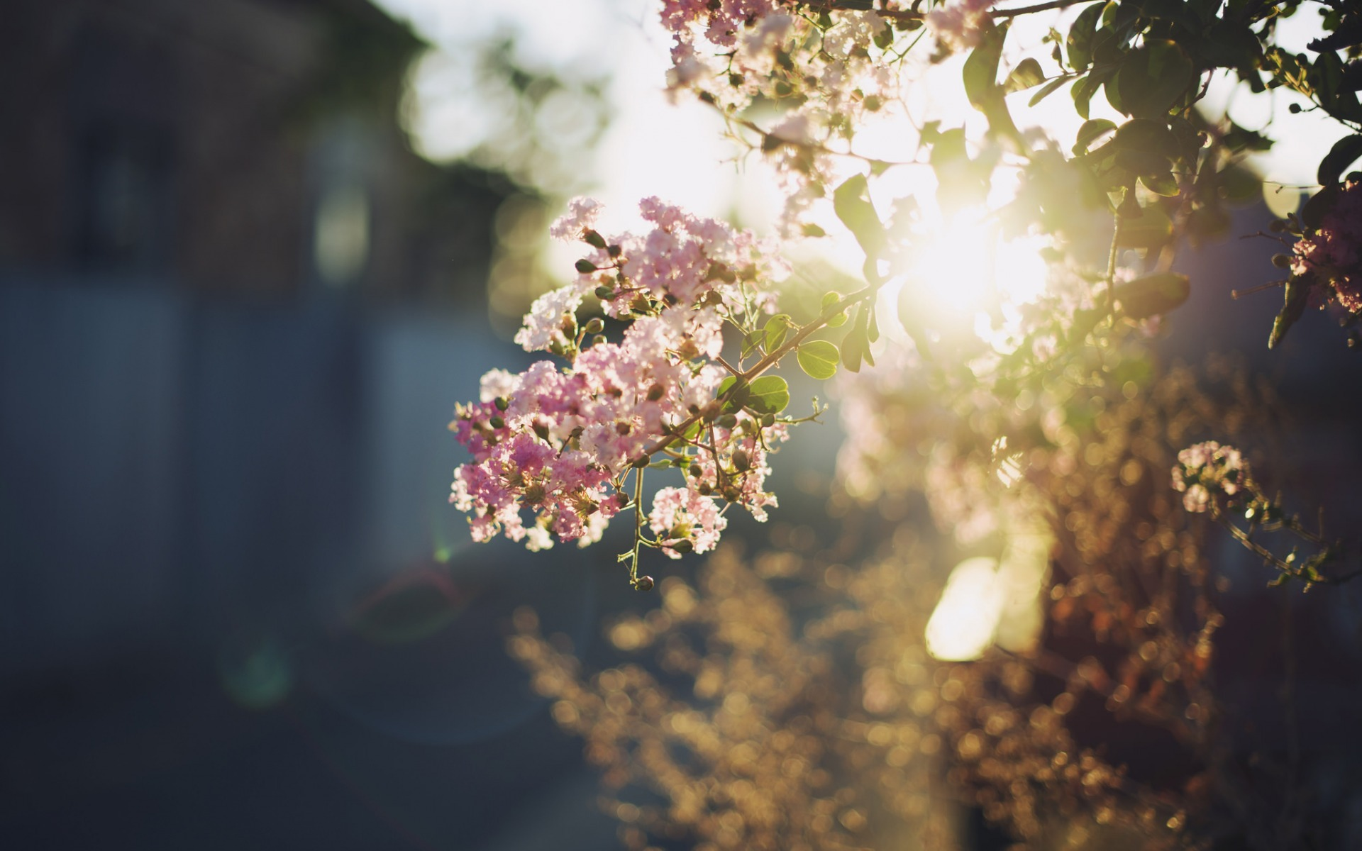 sunshine,  flower tree, nature