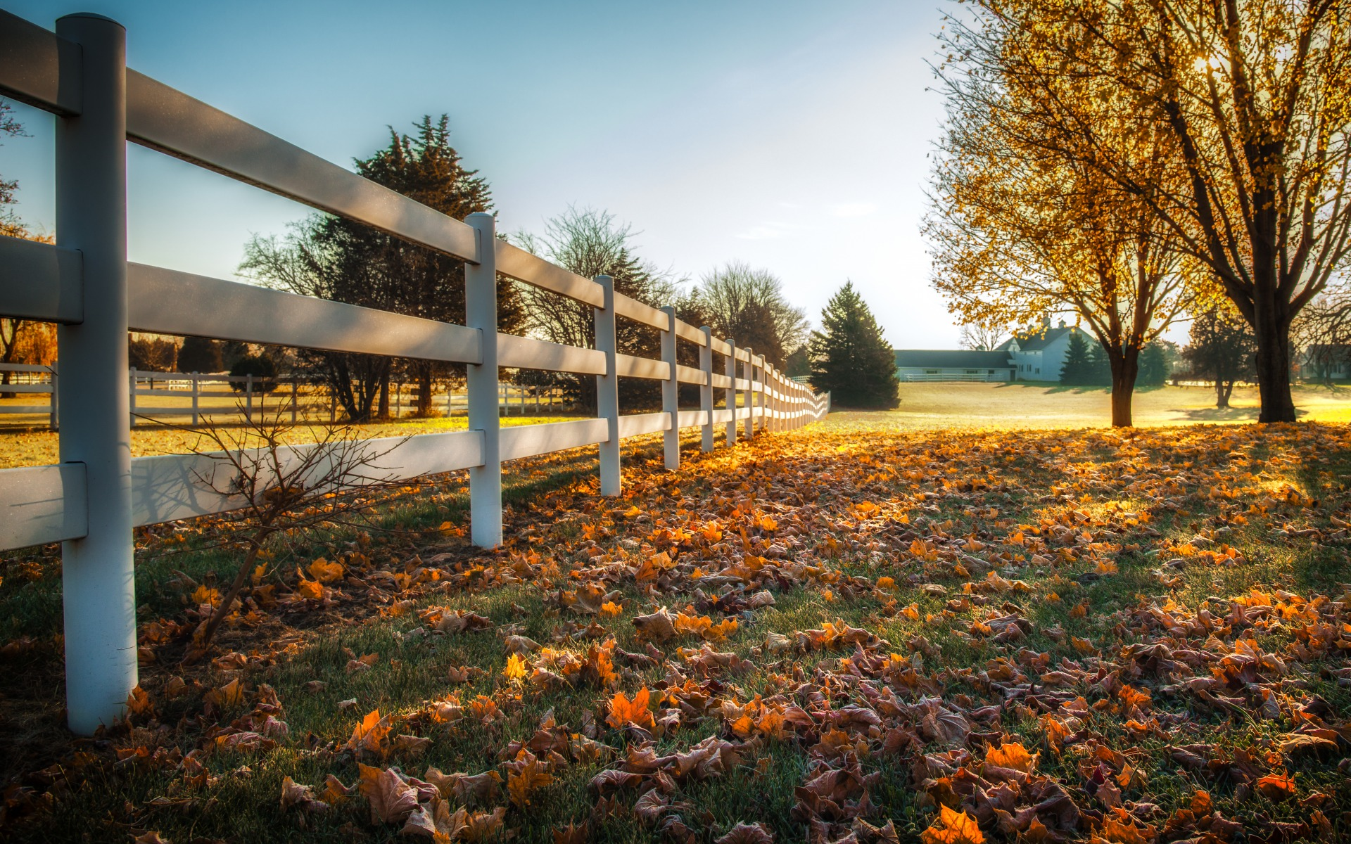 autumn, fence, fallen leaves, sun, trees