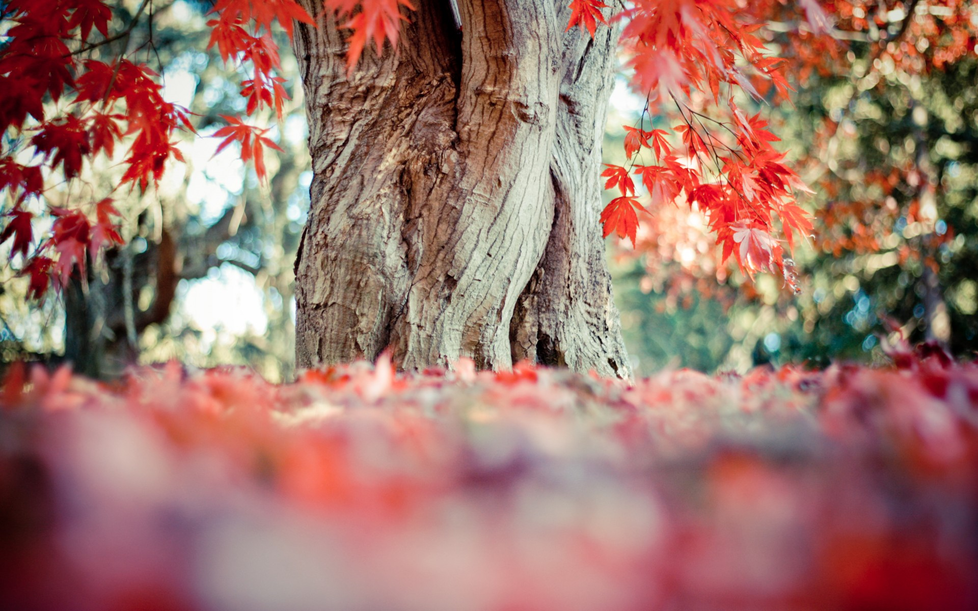 tree trunks, colorful ground, painted leaves