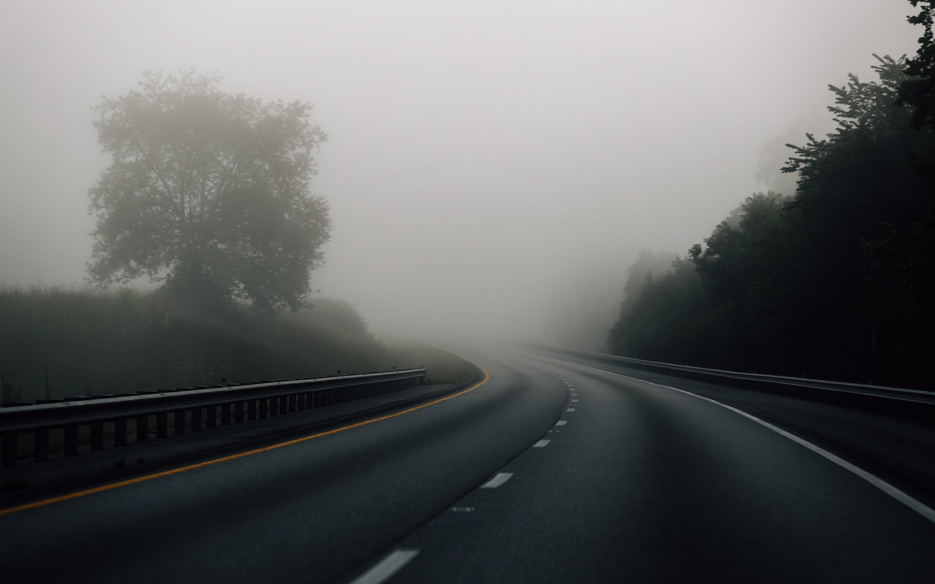 foggy road, sinister image, forest